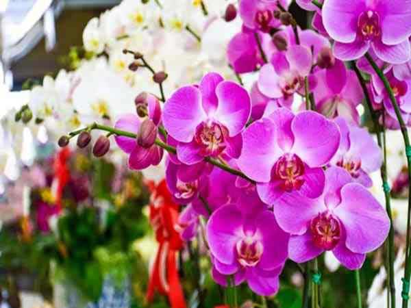 Chiêm bao thấy hoa lan nên đánh đề con bao nhiêu?