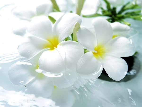 Mơ thấy hoa màu trắng là điềm báo gì?