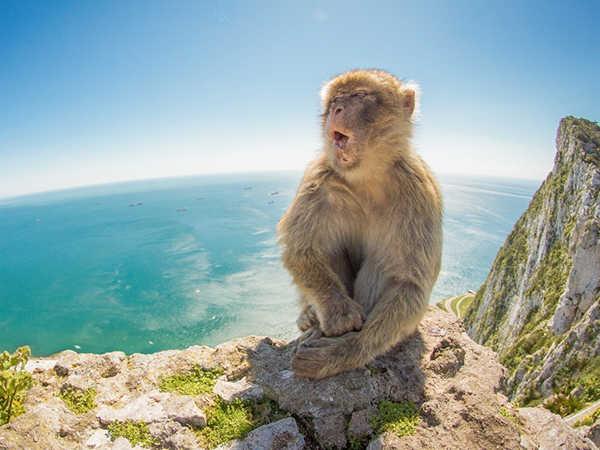 Chiêm bao thấy khỉ đánh con gì?