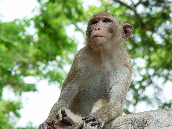 Nẳm mơ thấy khỉ là điềm báo lành hay dữ?