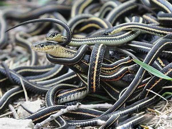 Chiêm bao thấy rắn thì nên đánh số đề con bao nhiêu