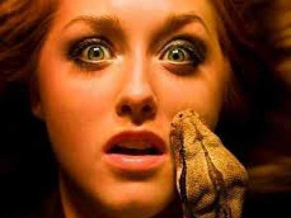Mơ thấy rắn cắn là điềm báo lành hay dữ?