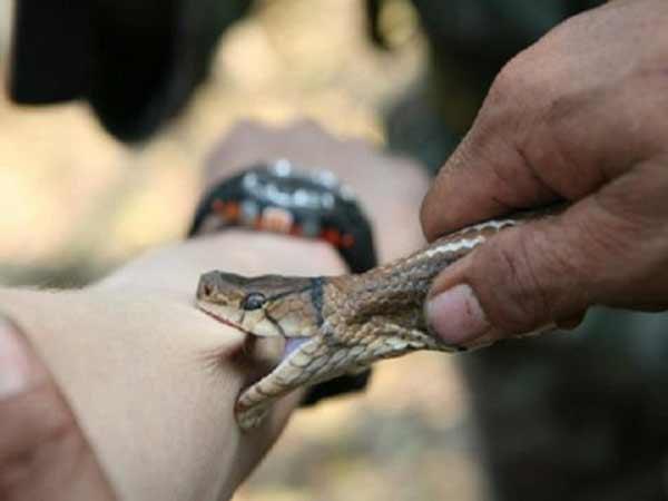Chiêm bao thấy rắn cắn đánh con gì?