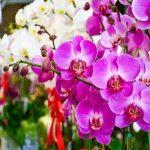 Mơ thấy hoa là đánh con gì? Mơ thấy hoa là điềm báo gì?