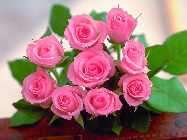 Mơ thấy hoa hồng là điềm báo lành hay dữ