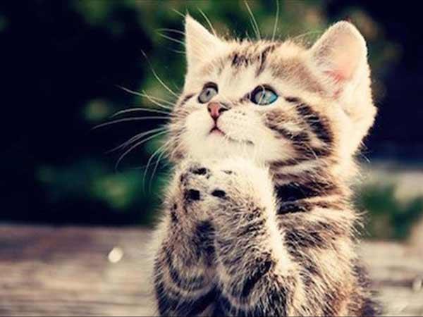 Mơ thấ mèo là điềm báo gì?