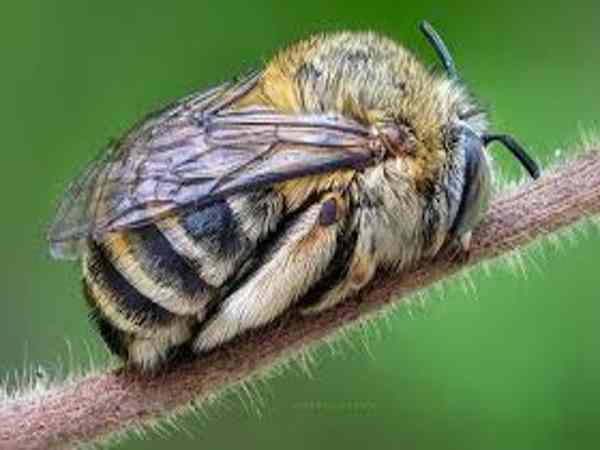 Chiêm bao thấy ong đánh đề con bao nhiêu?