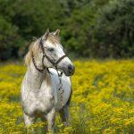 Mơ thấy ngựa đánh con gì? Mơ thấy ngựa mang ý nghĩa gì