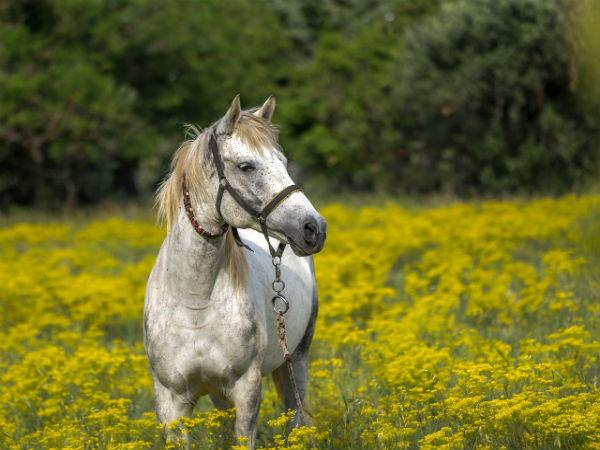 Mơ thấy ngựa đánh con gì trúng lớn và đem lại nhiều may mắn