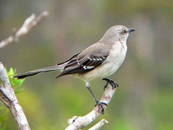 Giải mã giấc mơ thấy con chim là điềm báo gì?