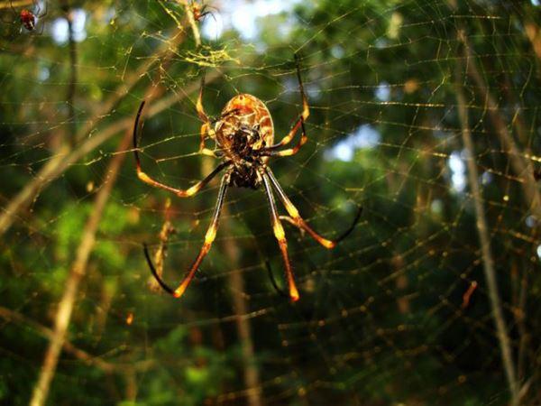 Mơ thấy nhện đánh tất tay cặp số nào? Là điềm tốt hay xấu?