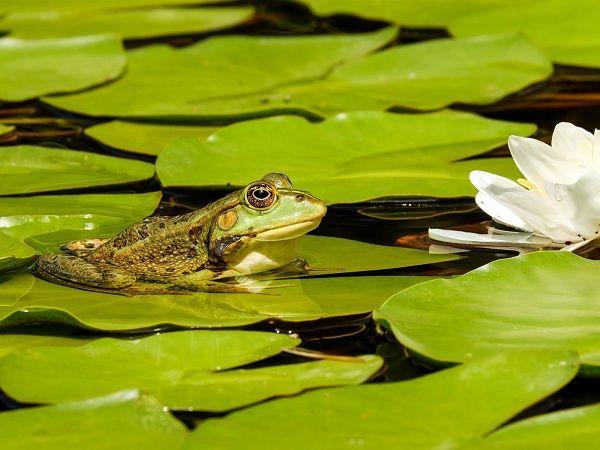 Mơ thấy ếch điềm báo lành hay dữ?